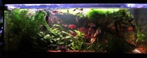 aquarium_3d_rueckwand-5-2jahre