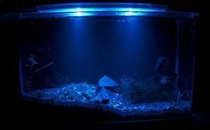 Fuval Spec Nachtbeleuchtung