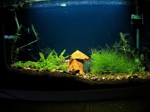 Aquascape Fuval Edge